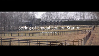 Spring of Shadai Stallion Station