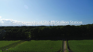 Summer Works of Shadai Stallion【動画】