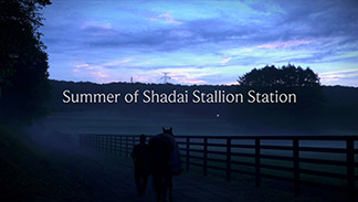 Summer of Shadai Stallion Station