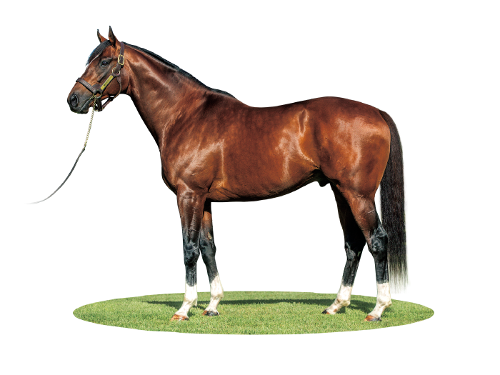 MAURICE photo : Arrowfield Stud