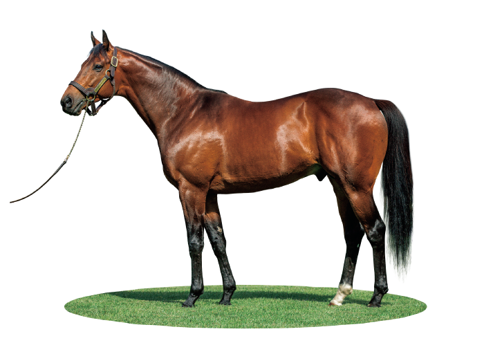 MIKKI ISLE photo : Arrowfield Stud