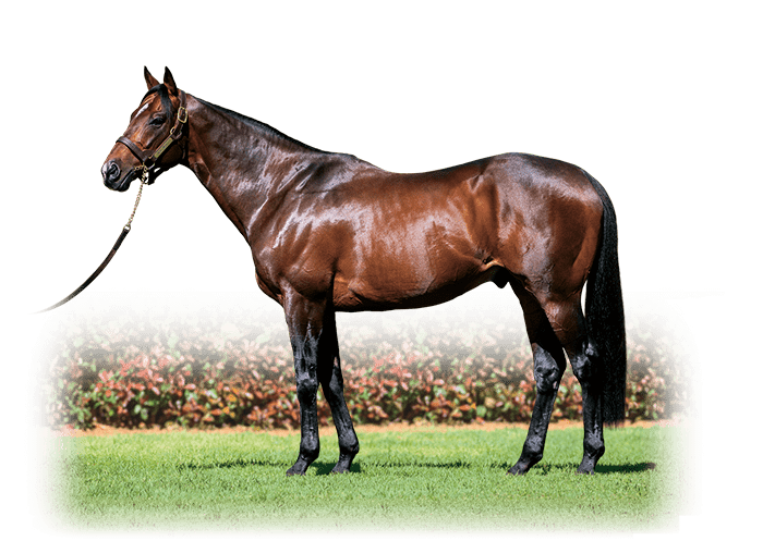 REAL IMPACT photo : Arrowfield Stud