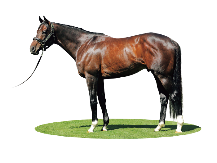 SATONO ALADDIN photo : Trish Dunell, Rich Hill Stud